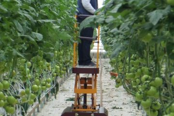 Cultural Process and Harvest Cart