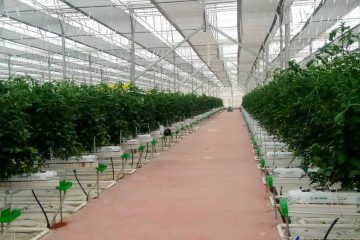 Greenhouse Automation Systems